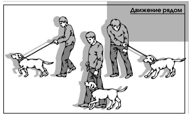 Дрессировка собаки: первые шаги