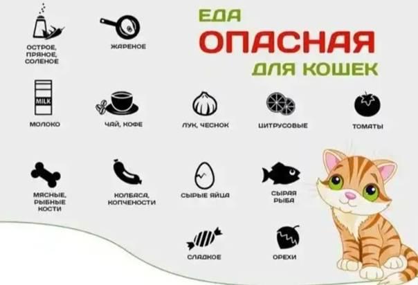 8 главных ошибок в содержании кошек, которые допускают многие владельцы