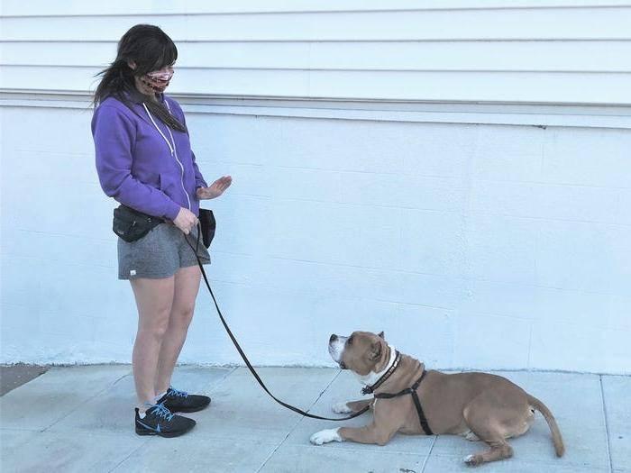 Как дрессировать собаку? 5 правил воспитания питомца