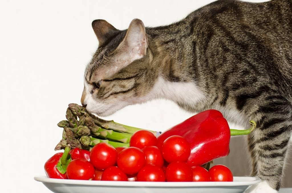 Как кормить кота натуральной едой: готовим коту сами