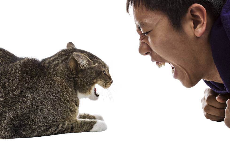Почему кусаются кошки