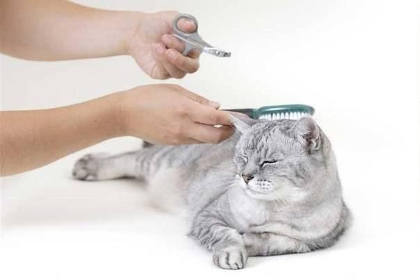 Что такое груминг? или для чего нужен профессиональный подход? ⋆ ветеринарная клиника max&vet
