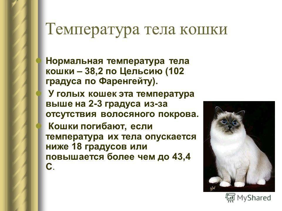 Как понять что у кота высокая температура: рабочие способы