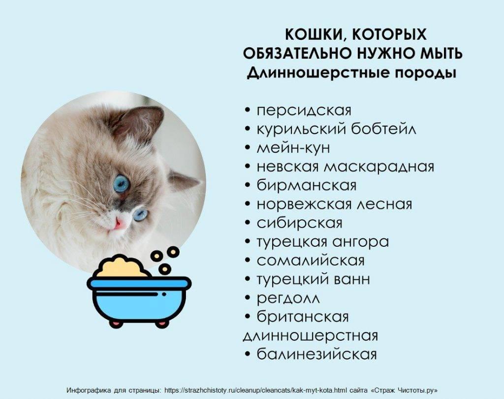 Правила прикорма котят, особенности рациона, оптимальный возраст