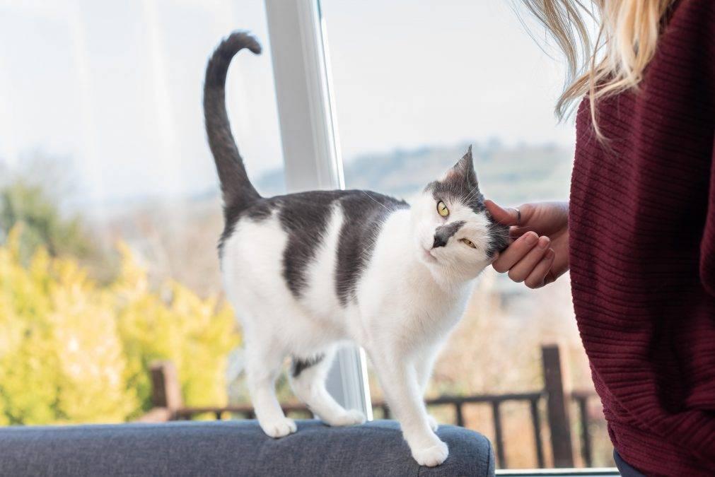 Почему кот метит территорию и как его быстро отучить от этого