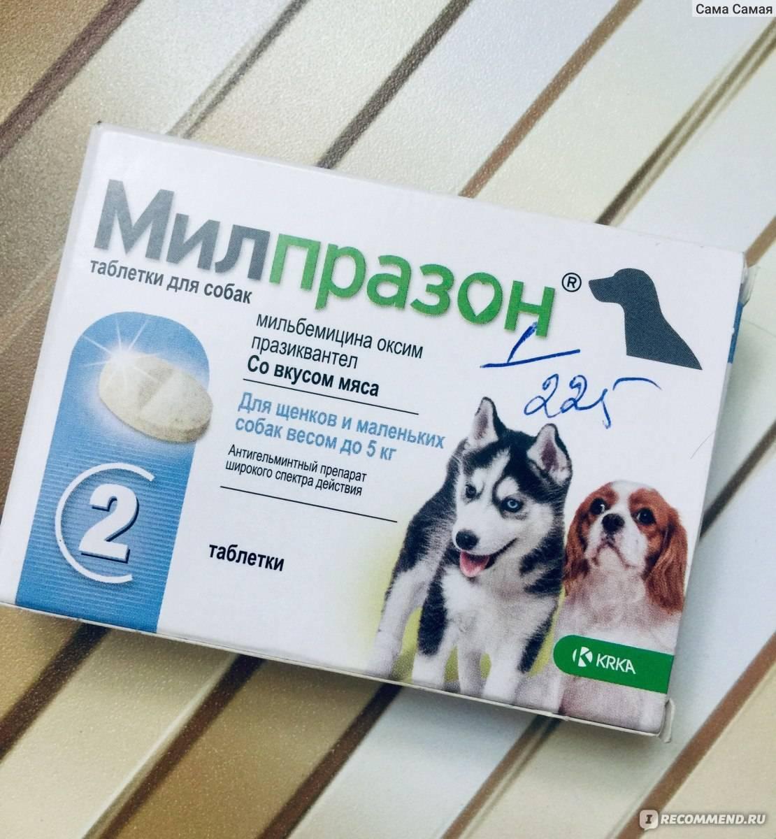 Милпразон таблетки д/котят и молодых кошек до 2 кг - купить, цена и аналоги, инструкция по применению, отзывы в интернет ветаптеке добропесик