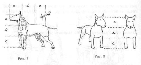 Миниатюрный бультерьер собака. описание, особенности, уход и цена породы   sobakagav.ru