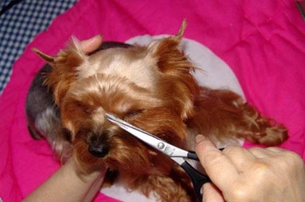 Почему собакам нельзя стричь усы