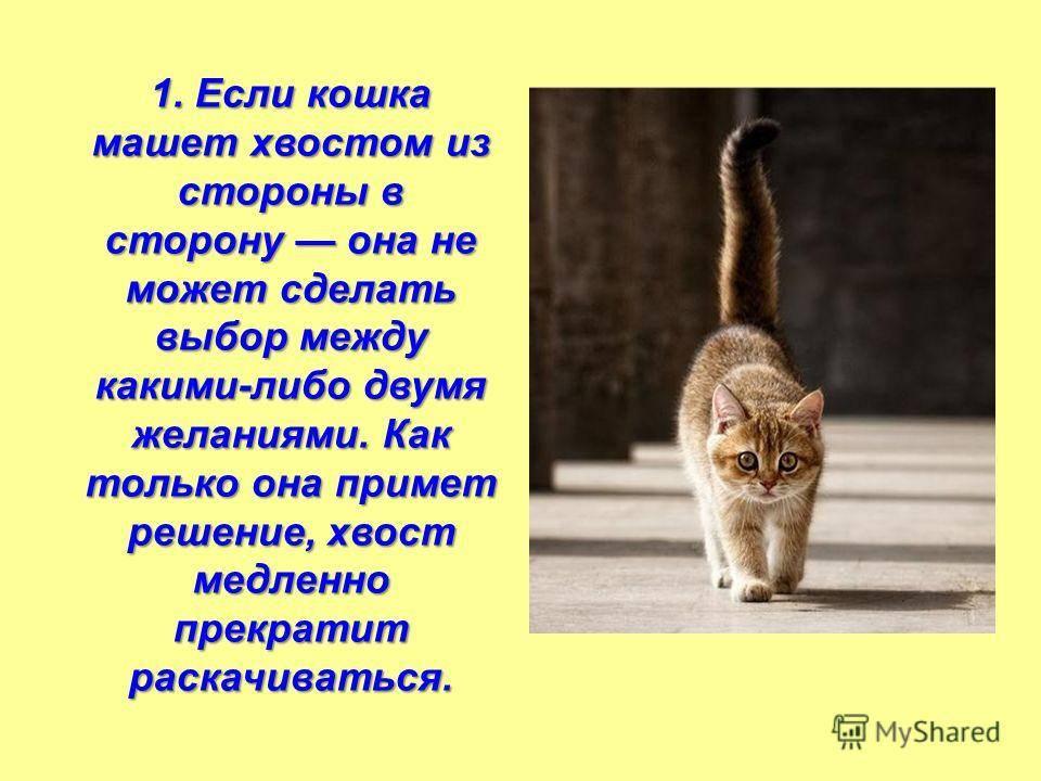 Что означает дрожащий хвост у вашей кошки? почему коты дергают хвостом кот трясет хвостом что значит