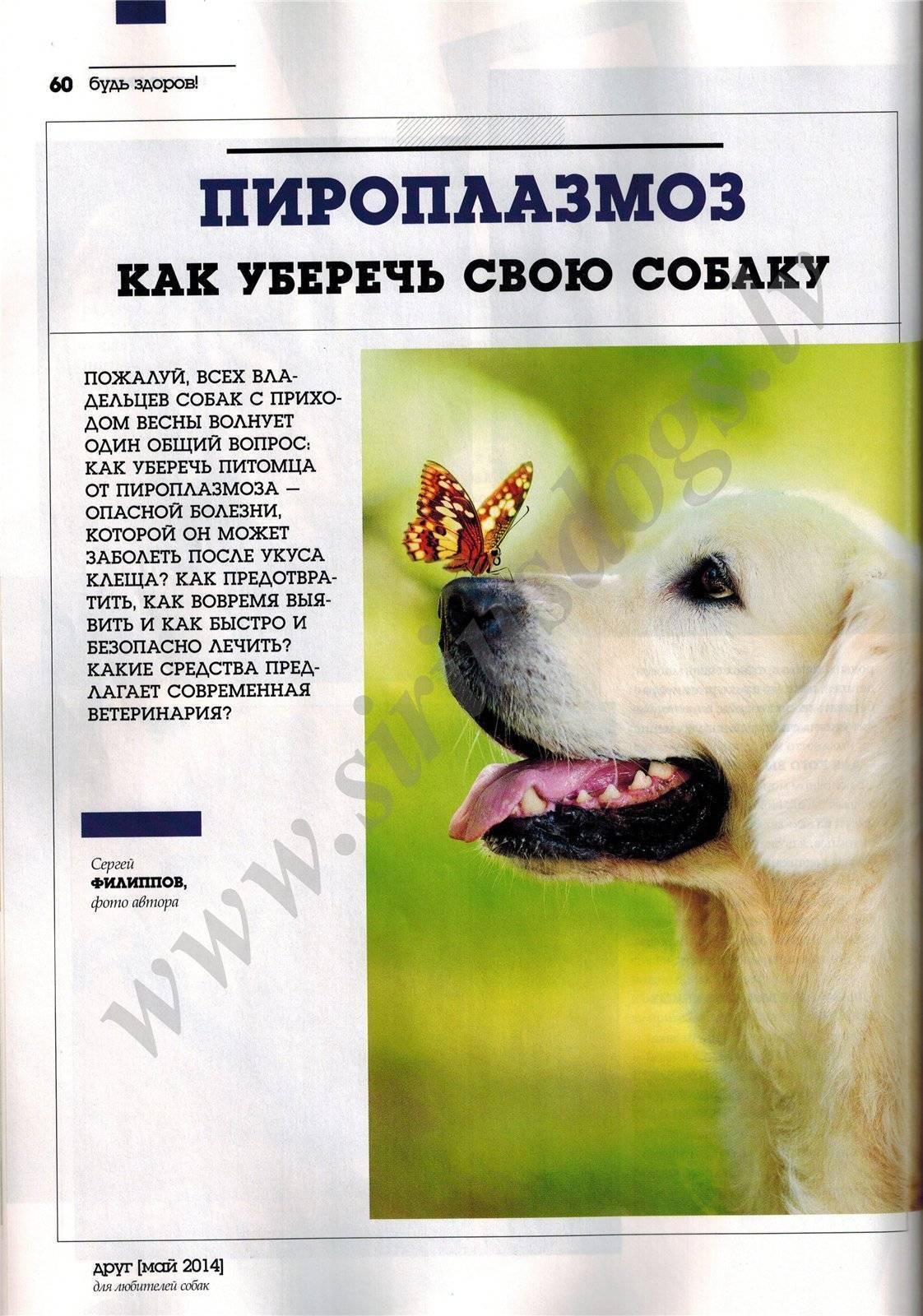 Пироплазмоз у собак (бабезиоз)