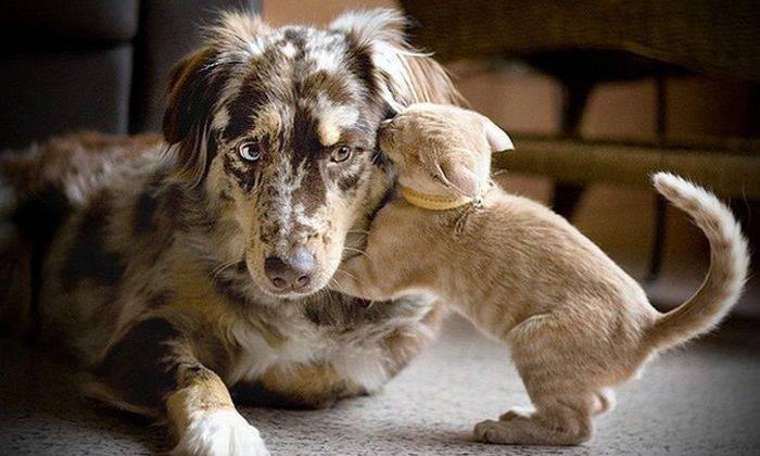 7 вредных продуктов, которые нужно исключить из рациона собаки
