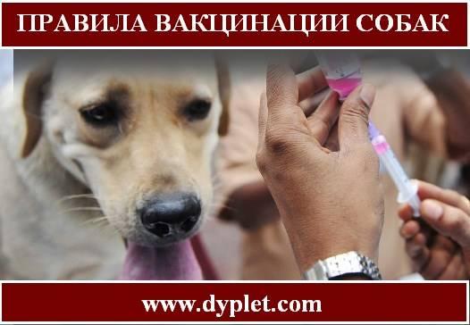 Через сколько дней можно делать прививку собаке после глистогонк?