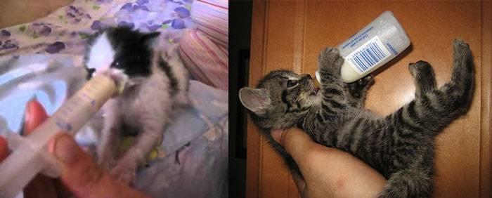 Чем кормить котенка в 4 месяца: состав рациона. как приготовить правильный корм для четырехмесячного котёнка, чего ему давать нельзя - автор екатерина данилова - журнал женское мнение