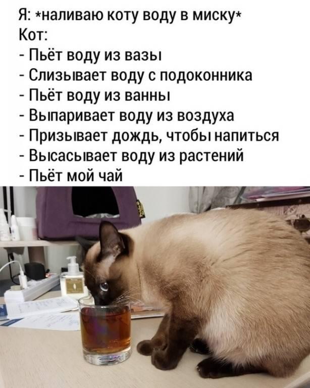 Как заставить кота пить воду: особенности ухода и воспитания, советы и рекомендации