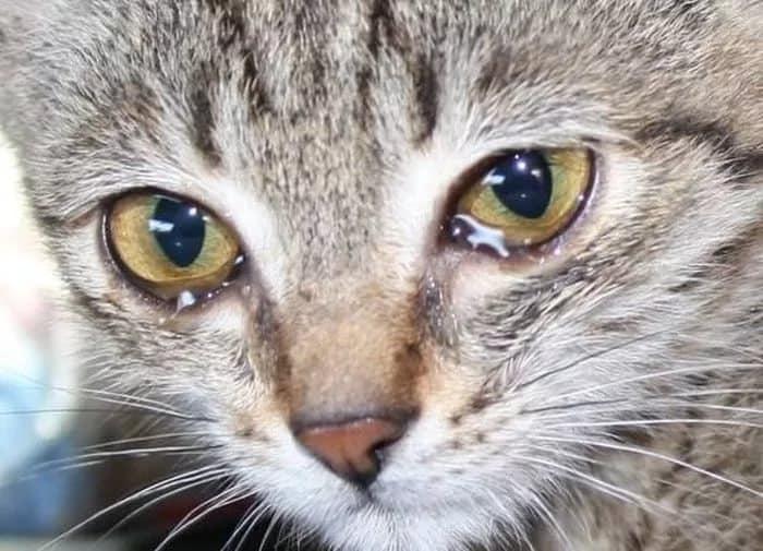 Глаза слезятся и красные: что делать, лечение | компетентно о здоровье на ilive