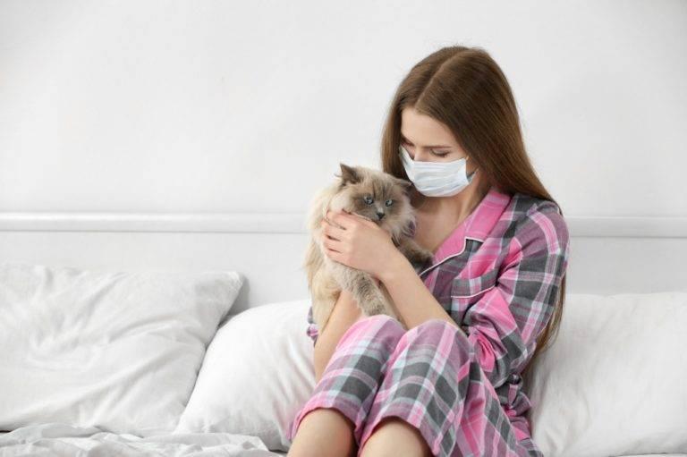 Почему кошка чихает и что с этим делать