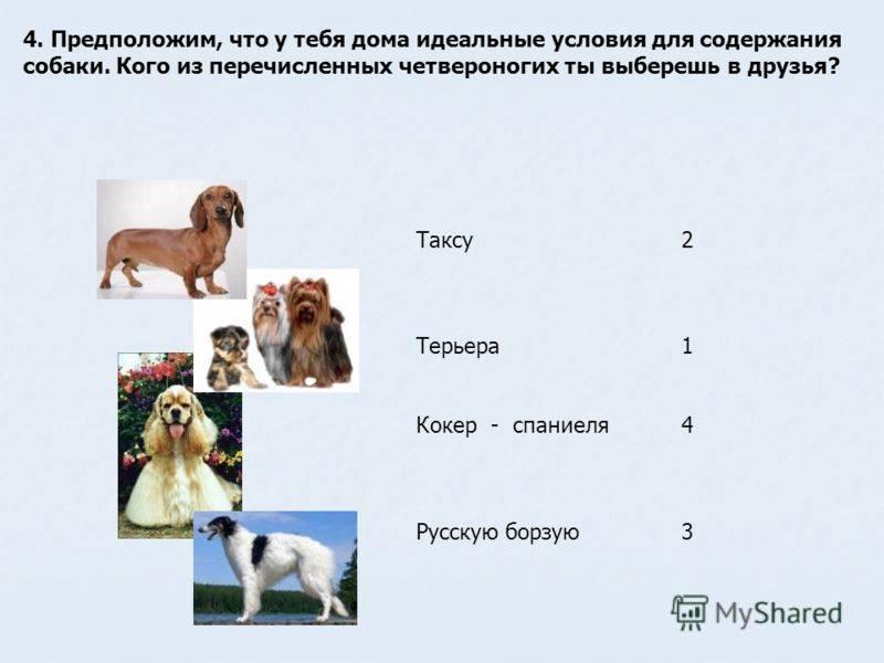 Сколько живут мопсы. продолжительность жизни мопса