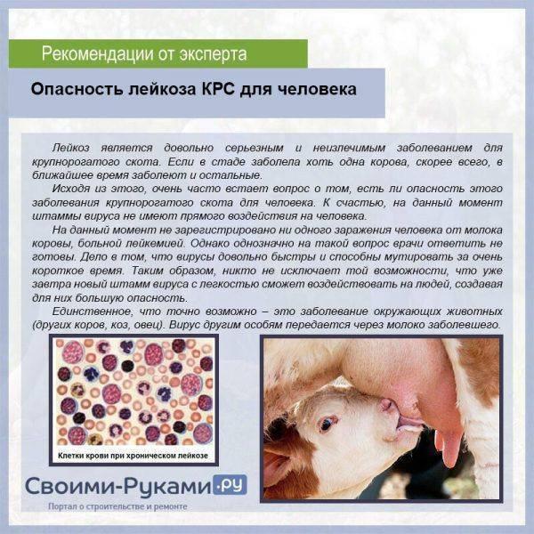 Вакцина против лейкоза кошек