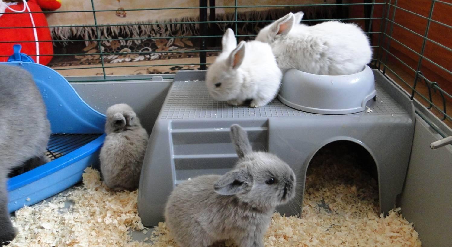 Уход за кроликами — особенности содержания в домашних условиях