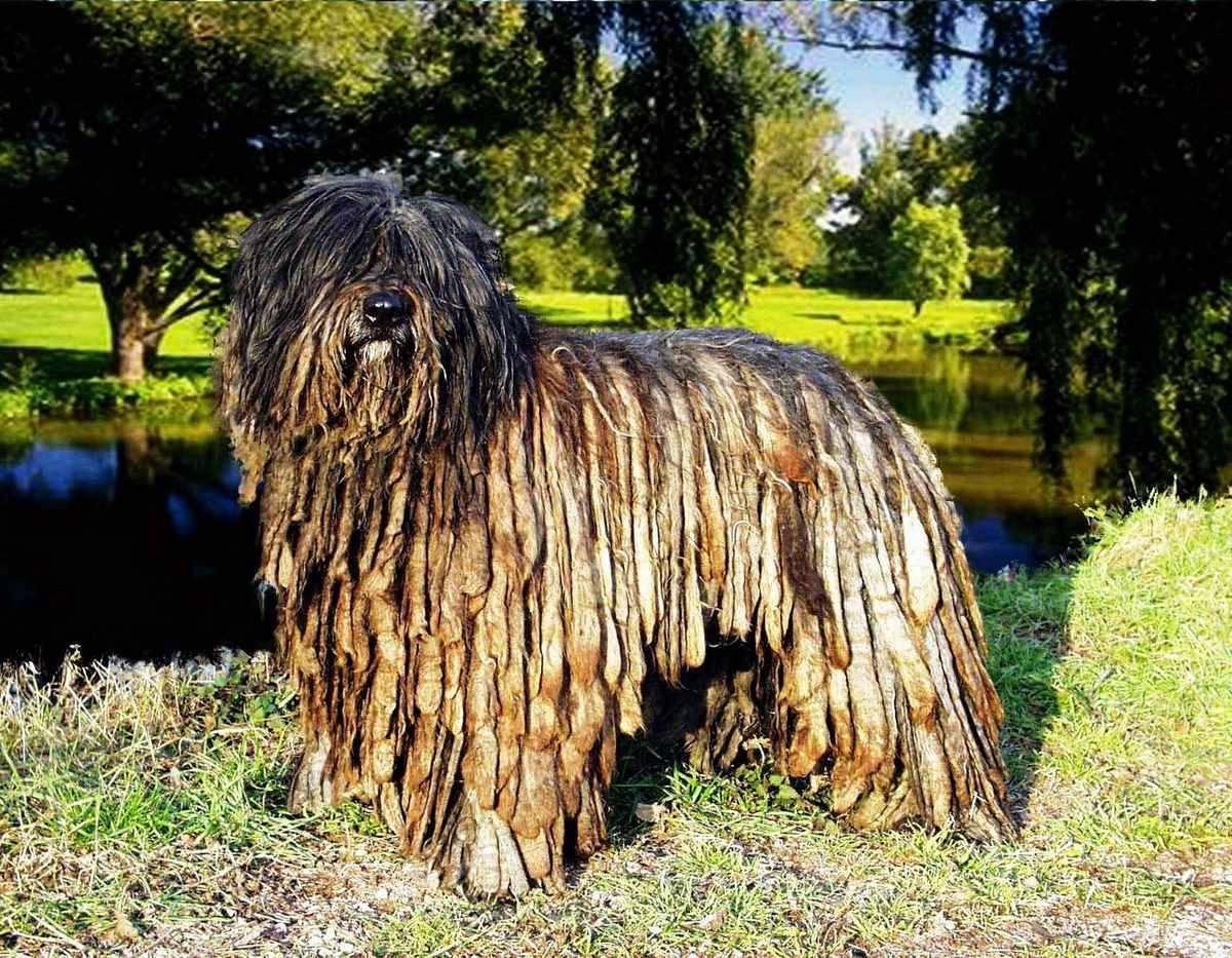 Обзор самых модных, известных и распространенных пород собак в россии