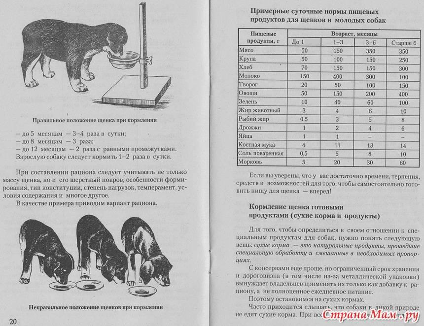 Типичные ошибки кормления собак в домашних условиях