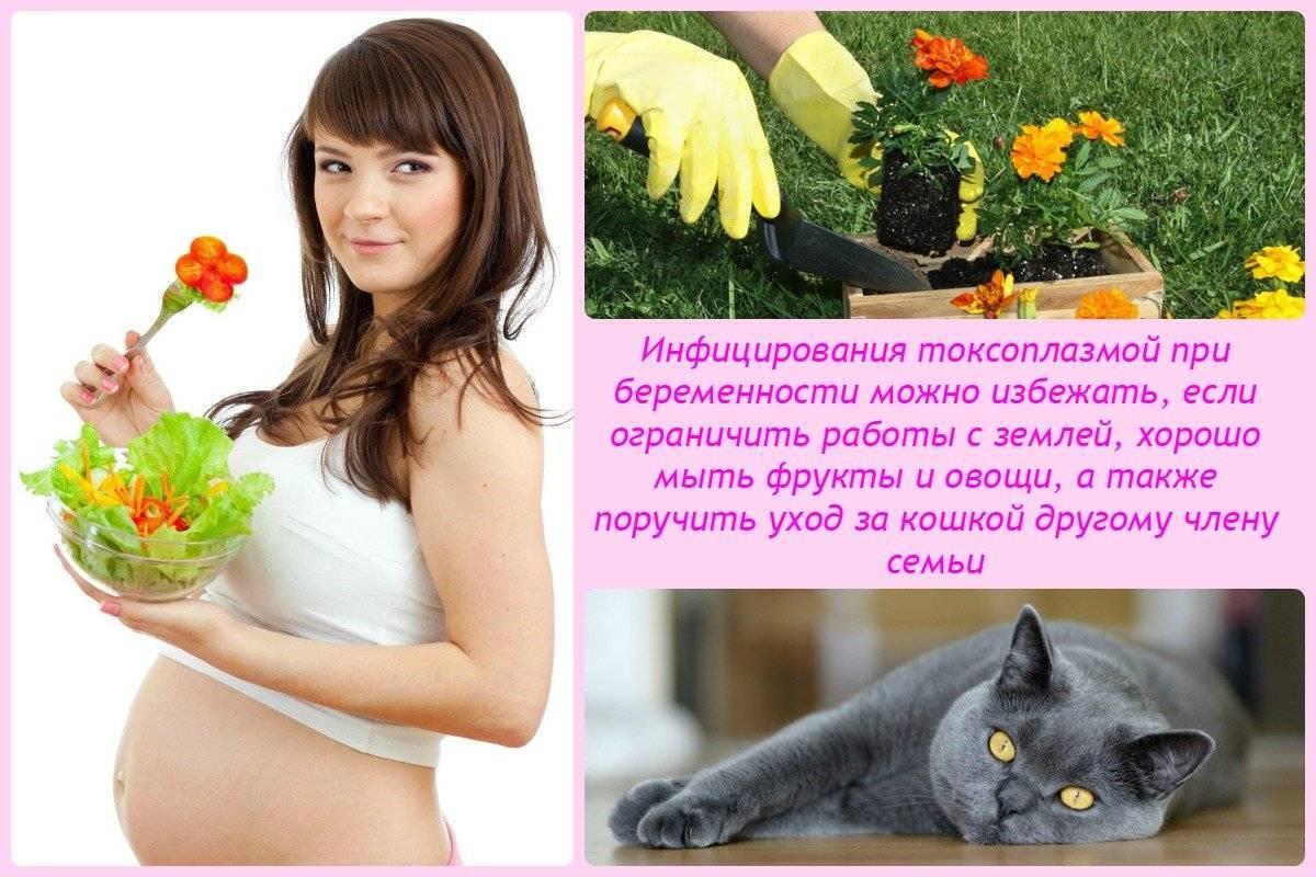 Токсоплазмоз у кошек и человека