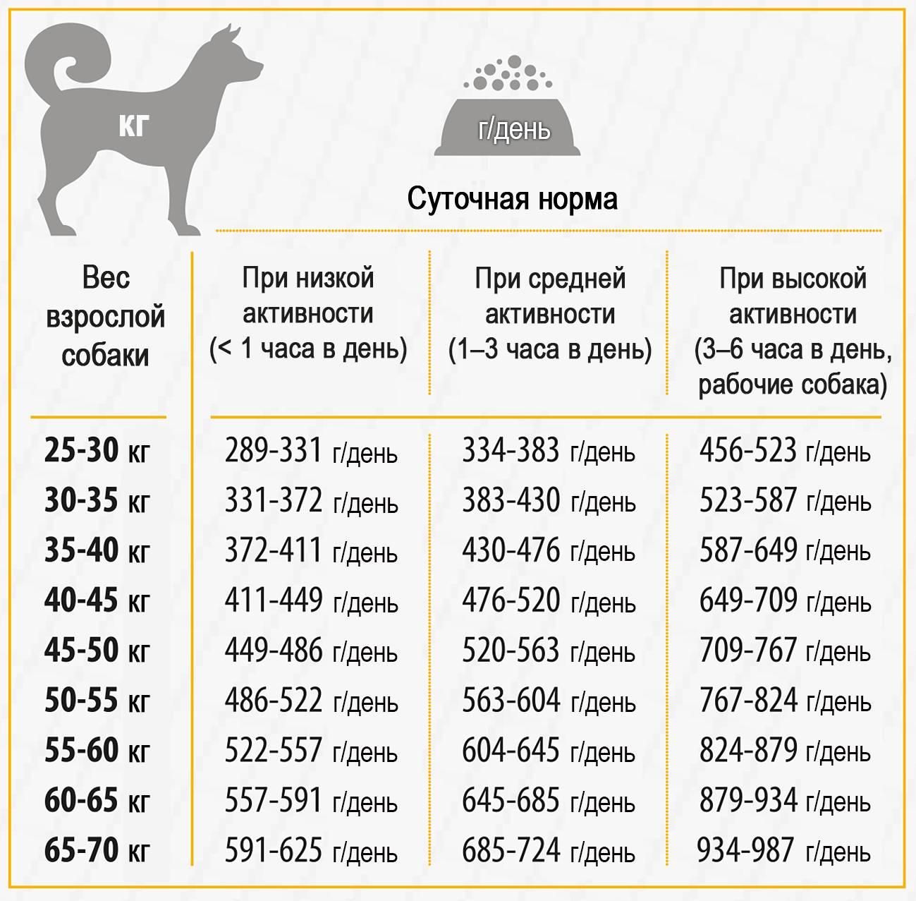 Можно ли кормить собаку натуральным и сухим кормом одновременно? 19 фото как правильно совмещать типы кормления?