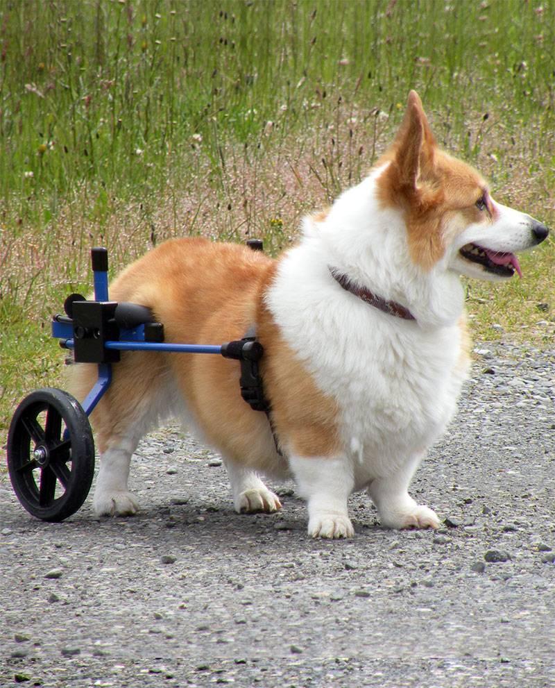 Инвалидные коляски для кошек