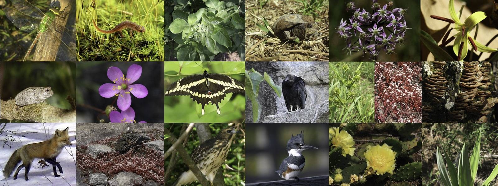 5 животных, встреча с которыми не бывает случайной