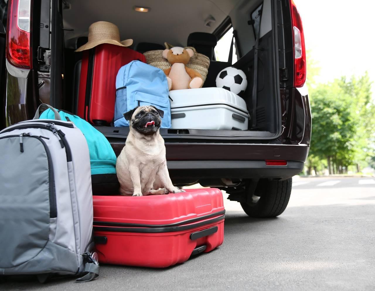 Про отпуск. куда деть собаку?