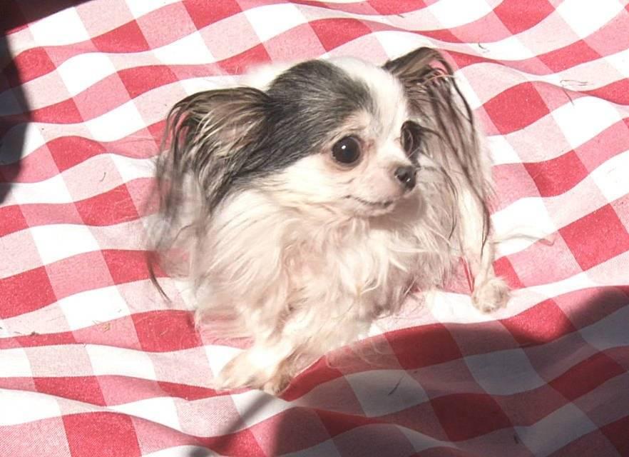 Самые милые собаки: общие черты, топ лучших пород, выбор и уход