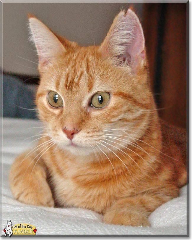 Как отличить кота от кошки: при рождении, по поведению, по морде, по цвету | zoosecrets