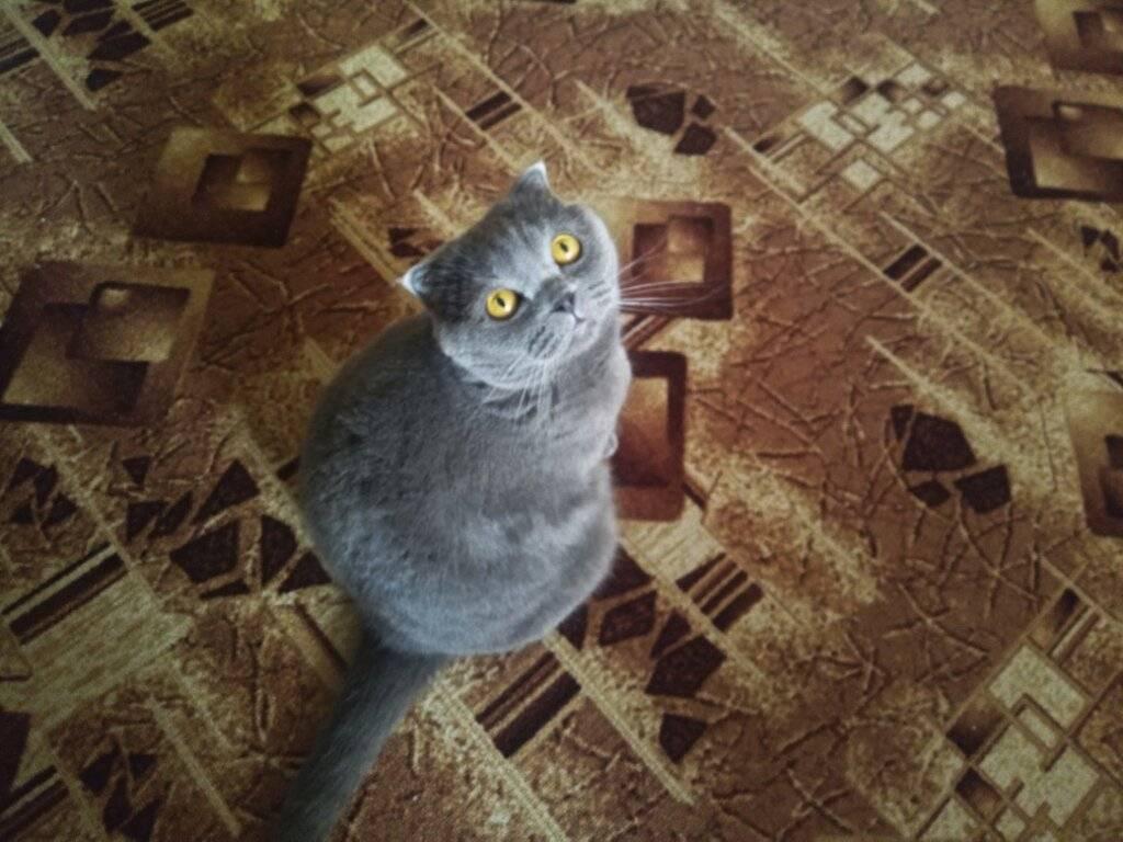 Что делают кошки, когда хозяев нет дома: 5 забавных ситуаций | hill's