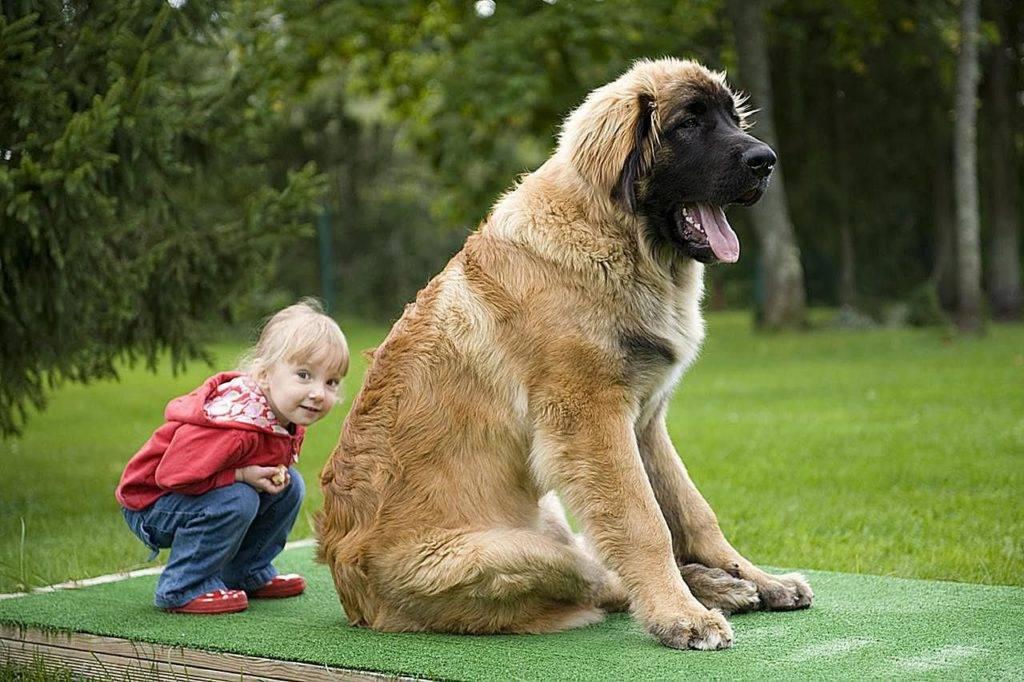 Маленькие породы собак для квартиры (39 фото): какую домашнюю собаку небольшого размера лучше завести? уход за мелкими собаками со спокойным характером