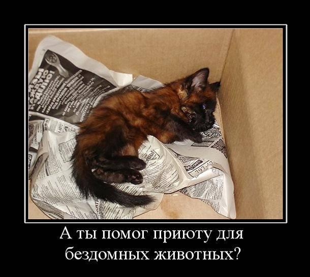 Почему коты уходят умирать из дома: 5 причин, куда идут, как себя ведут перед смертью