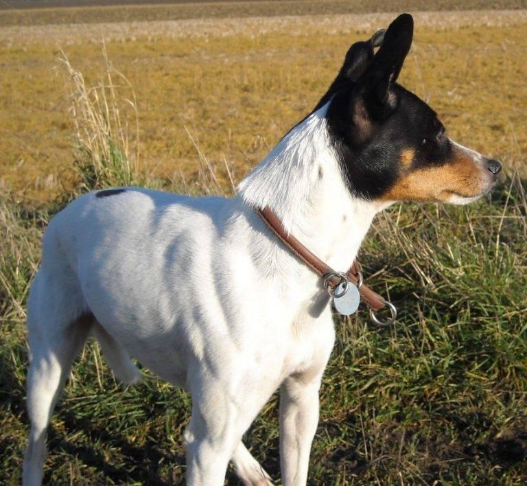 Породы собак с фотографиями, названиями и описанием