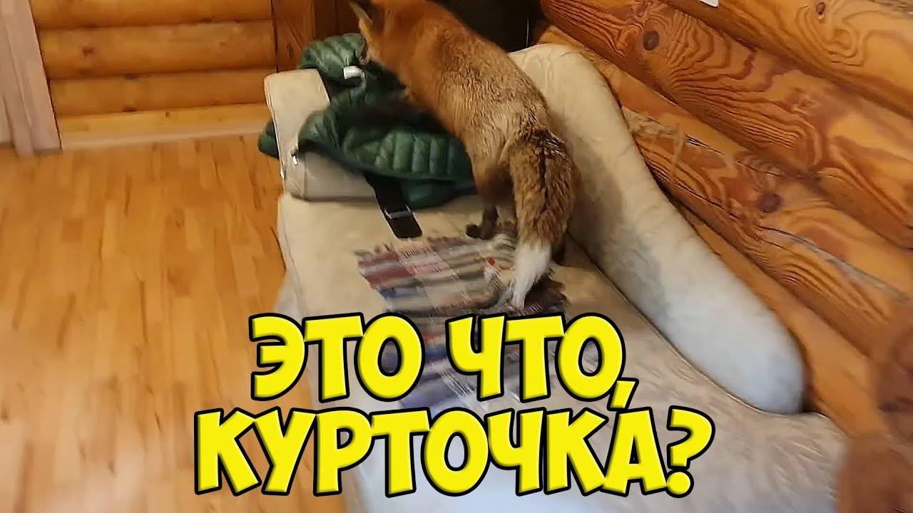 Собака скулит | почему скулит без причины и что делать