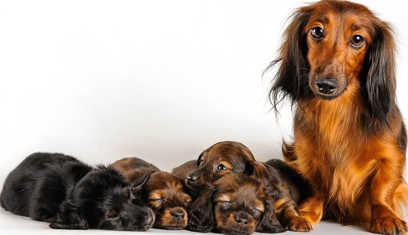 Смешные клички для собак | для девочек и мальчиков