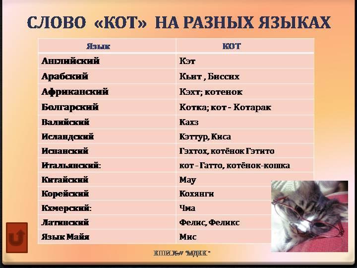 Как назвать кошку или кота, имена для мальчиков и девочек