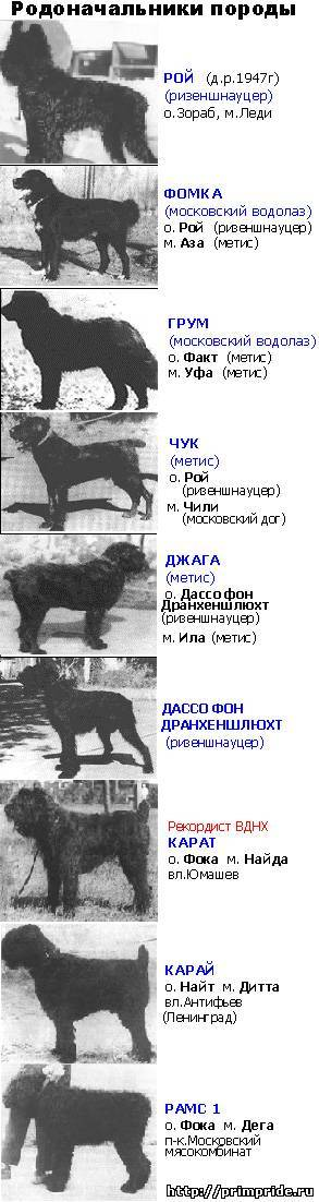 Русский черный терьер (собака сталина): фото и видео, цены, описание породы