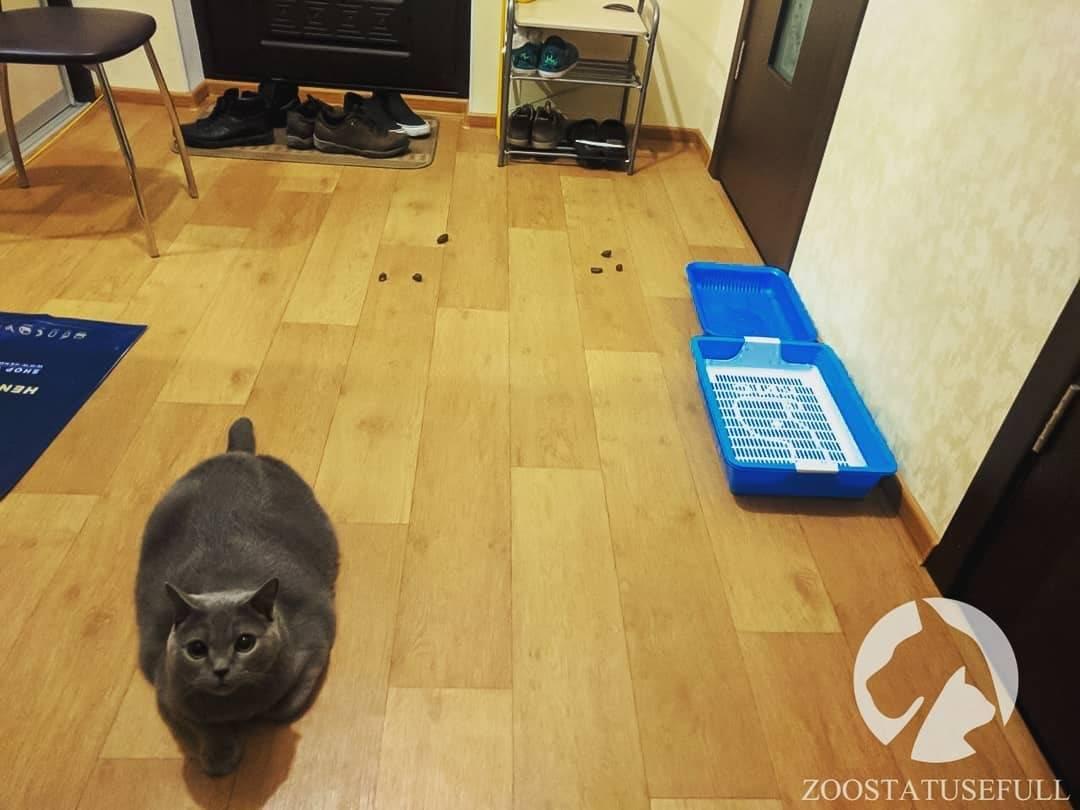 Почему кошки гадят где попало?