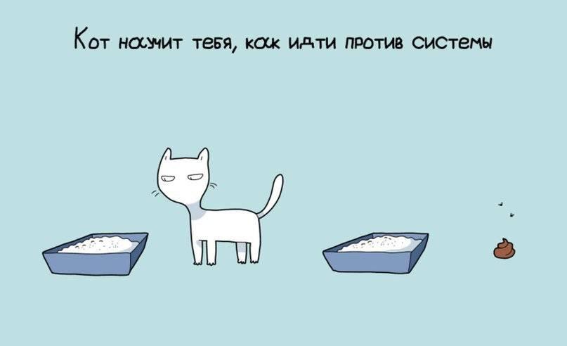 При каких условиях можно заводить второго кота и как подобрать нового питомца