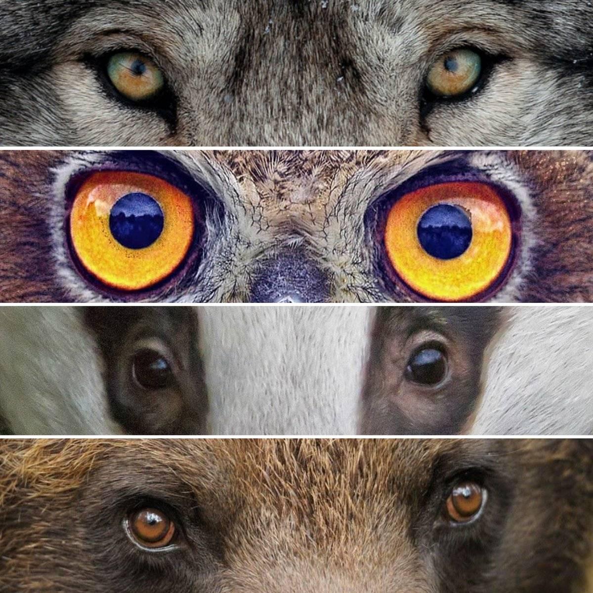 Как видят собаки: какое зрение, различают ли цвета, как собаки видят в темноте