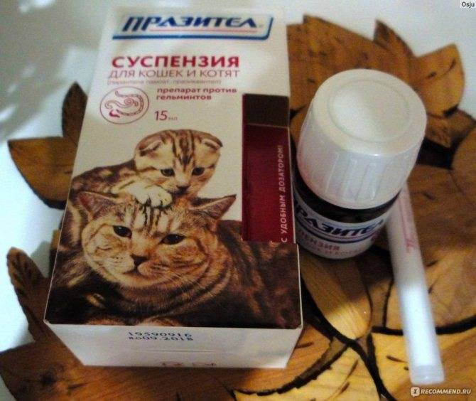 Таблетки от глистов для собак   названия и показания к применению таблеток от глистов для собак   компетентно о здоровье на ilive