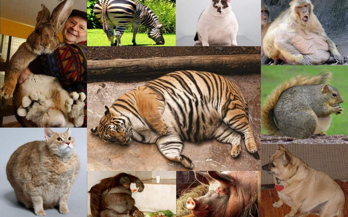 Толстяки в истории (12 фото)