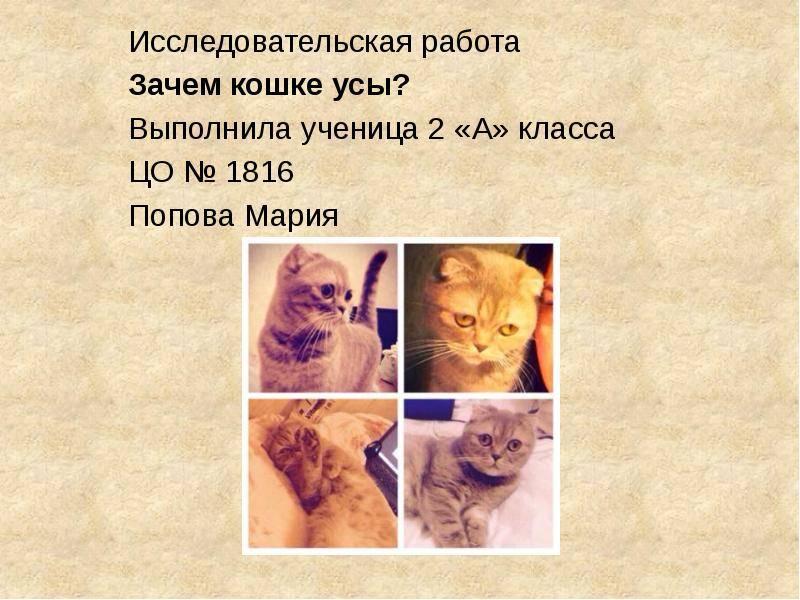 Усатый-полосатый: зачем кошкам и котам нужны усы. зачем кошкам усы? как называются усы у кошки?