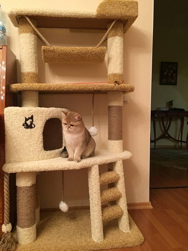 Насколько нужен свой домик кошке