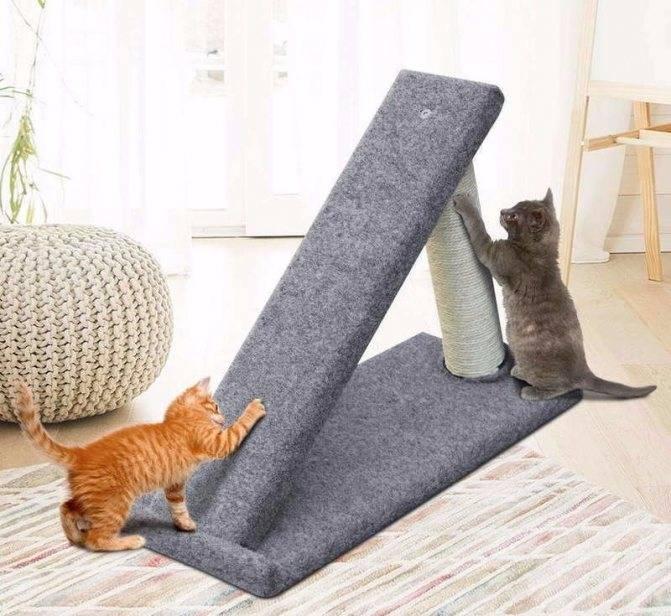 Когтеточка для кота: зачем нужна и как приучить?