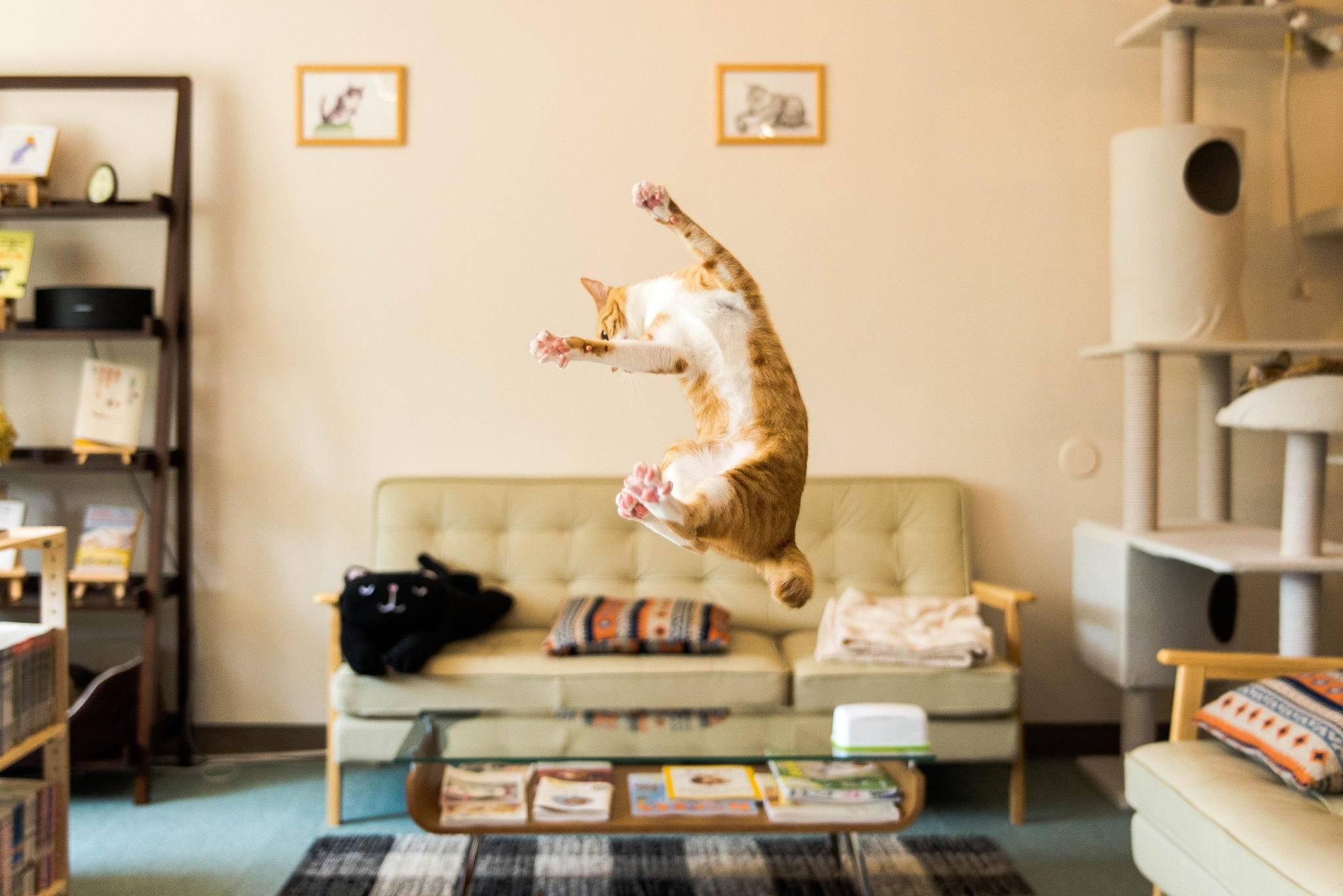 Чем развлечь кошку и как помочь ей не скучать дома? | hills
