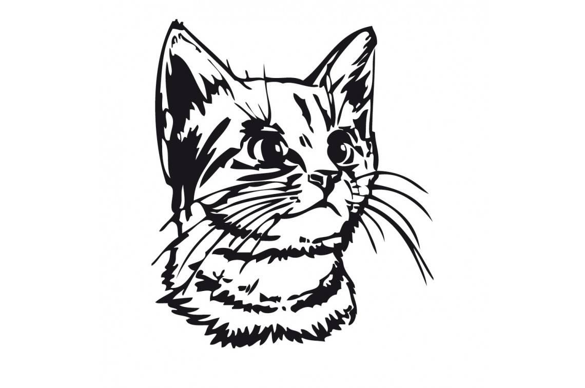 Как нарисовать кота карандашами поэтапно для начинающих